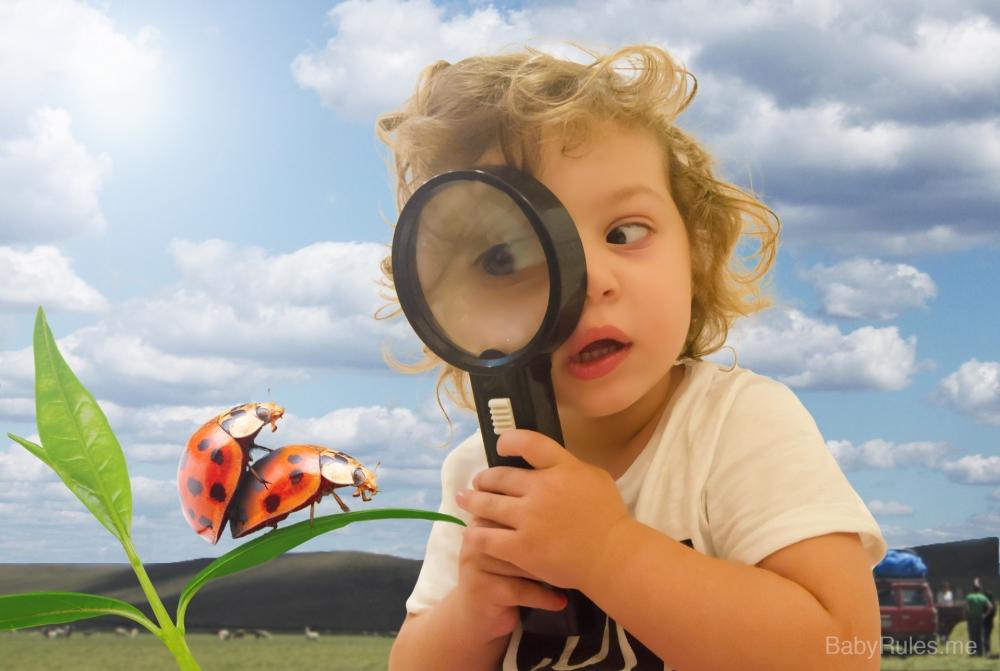 Kid is looking at bugs making love